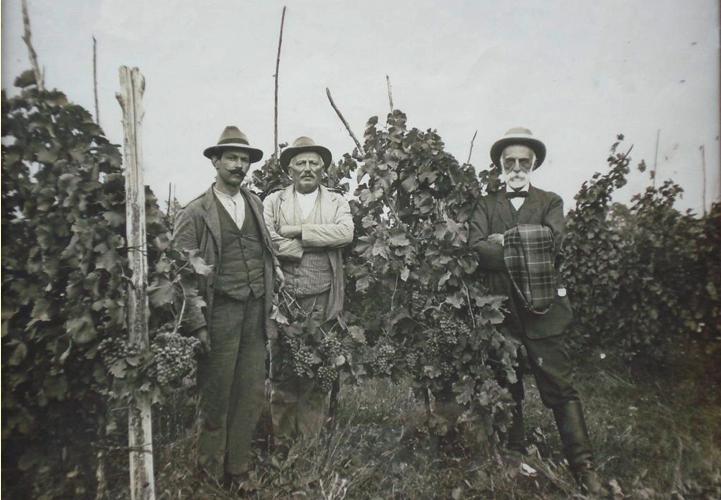 Voyage au coeur de la vitiviniculture du siècle dernier