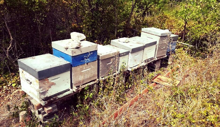 Les ruches de Thomas installées dans les vignes Labadens